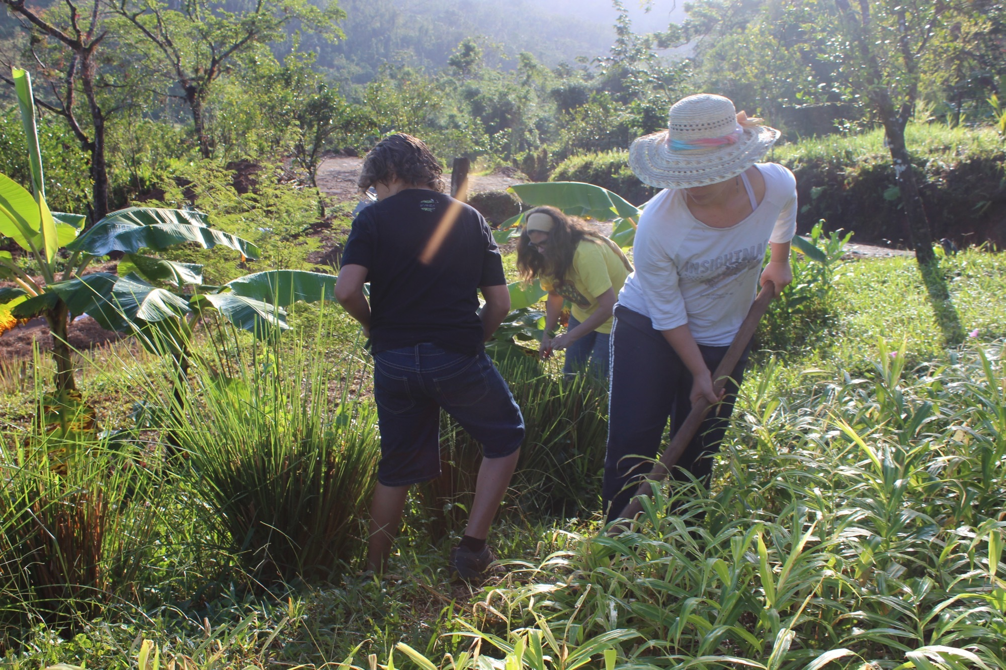 Working the Land at Plenitud PR