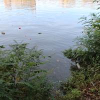 Raritan River Pollution