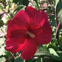 2011_garden_16.jpg
