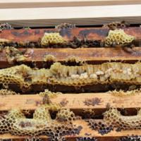 Apiculture Initiative: Nucleus Hive Frames