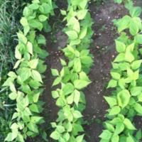 2011_garden_28.jpg