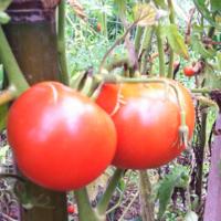 2011_garden_24.jpg