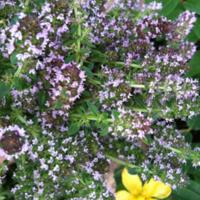 2011_garden_12.jpg
