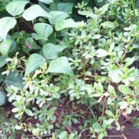 2011_garden_23.jpg
