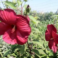 2011_garden_18.jpg