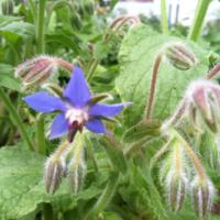2011_garden_19.jpg