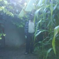 Organic Garden in Domboshava, Zimbabwe