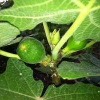 2011_garden_29.jpg