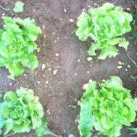 2011_garden_15.jpg