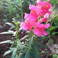2011_garden_27.jpg