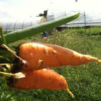 2011_garden_30.jpg