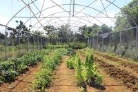 Green House Growing Post-María